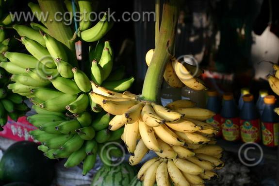 banana-tree.jpg