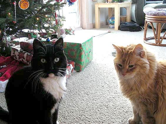 cats-at-christmas-005