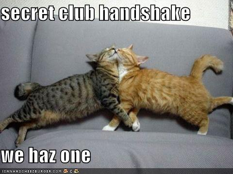 cats-secret-handshake