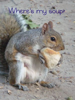 squirrel-and-bread