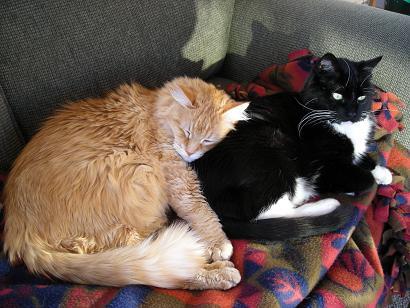 cuddly catsA 003