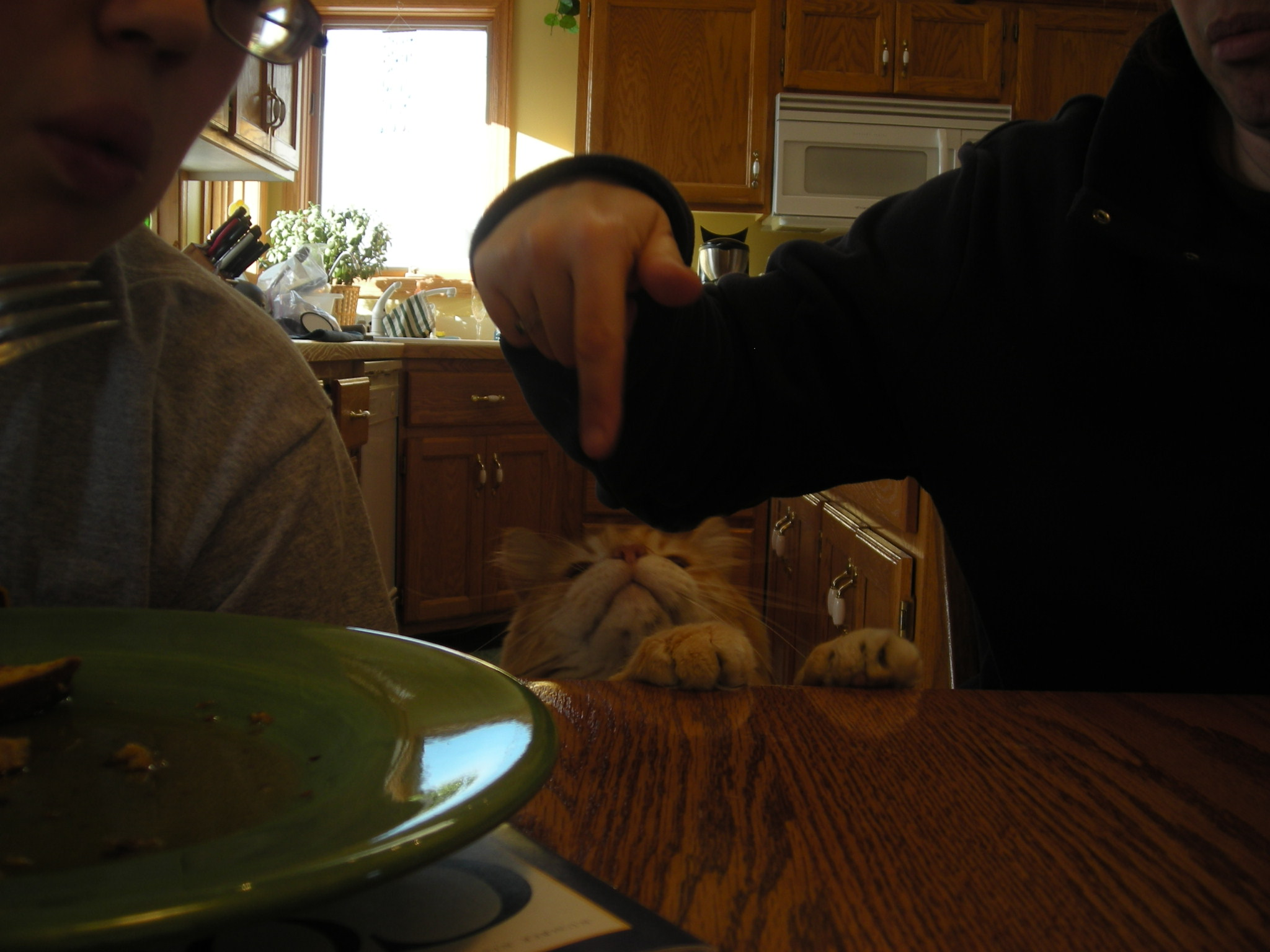 kitties and minestrone 008